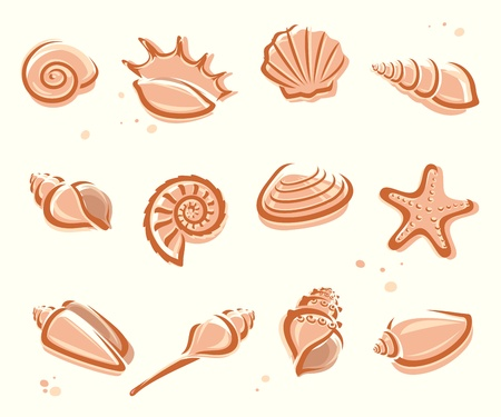Seashells set  Vector Vector