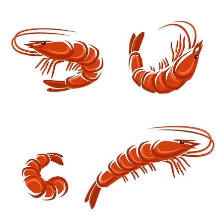 Shrimp set  Vector Vector