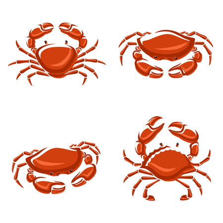 Crab set  Vector Vector