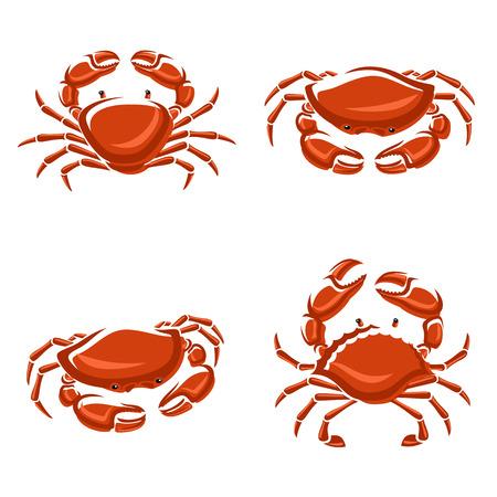 Crab set  Vector