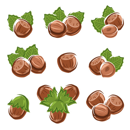 Hazelnut nuts set Vector