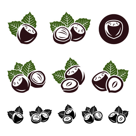 nutty: Hazelnut nuts set  Vector