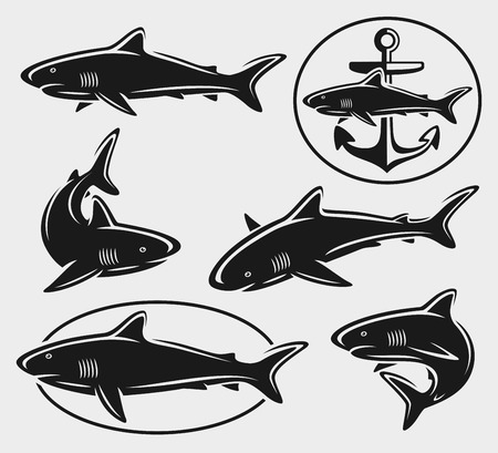 Shark set  Vector  Vector