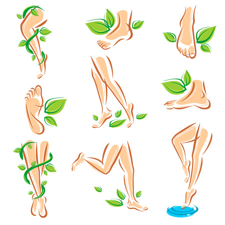 woman legs: Healthy legs set  Vector