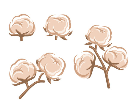 Cotton set  Vector  Vector