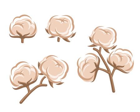 planta de algodon: Set Algod�n Vector