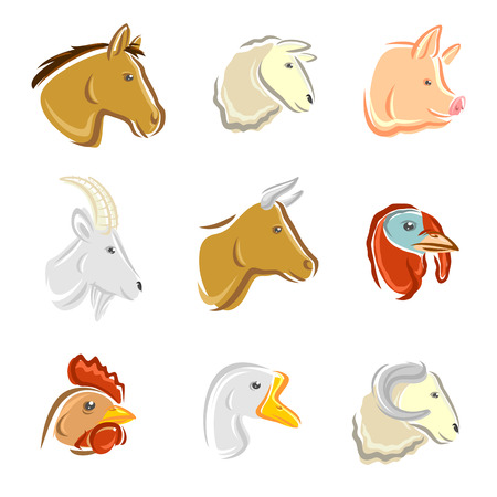 cock duck: Farm animals set  Vector