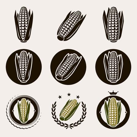 planta de maiz: Etiqueta de ma�z y los iconos conjunto de vectores Vectores