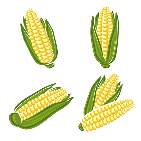 Conjunto de milho Vector Ilustra��o