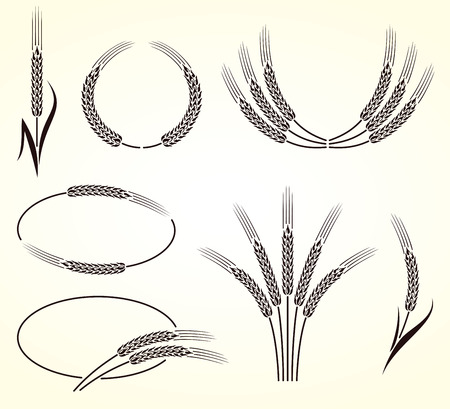 Ears of wheat and rye set  Vector  Vector