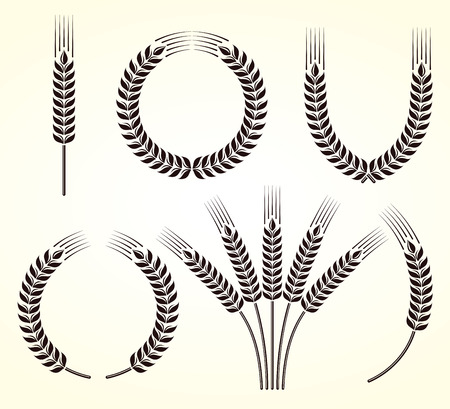 Ears of wheat and rye set  Vector Çizim