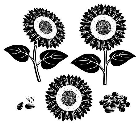 Sunflower set  Vector Vector