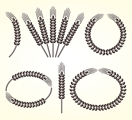 Ears of wheat and rye set  Vector Illustration