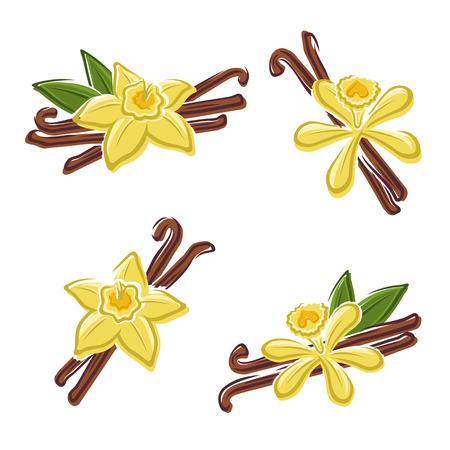 flor de vainilla: Vanilla conjunto Vector