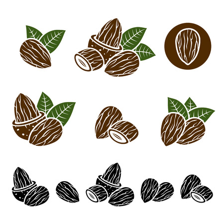 tree nuts: Almonds set  Vector Illustration