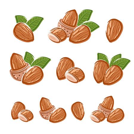 Almonds set Vector