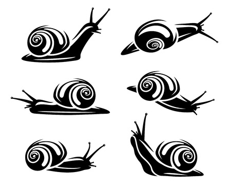 Snail set  Vector  Vector