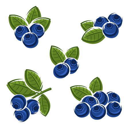 berry fruit: Blueberries set.