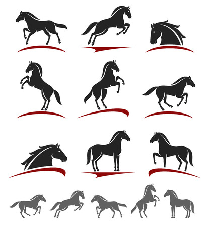 Horses: Horse set.  Illustration