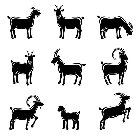 domestic goat: Goat set. Illustration