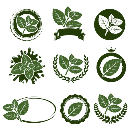 mint leaves: Mint leaves label set.