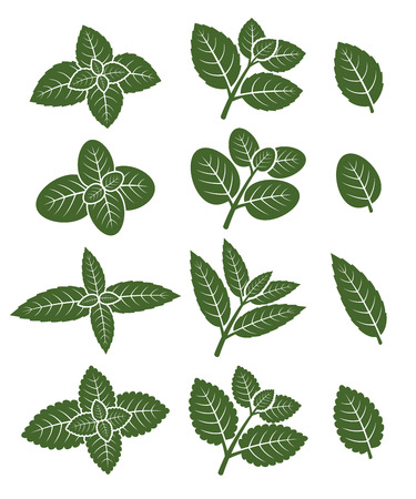 peppermint: Mint leaves set.  Illustration
