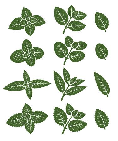 spearmint: Mint leaves set.  Illustration