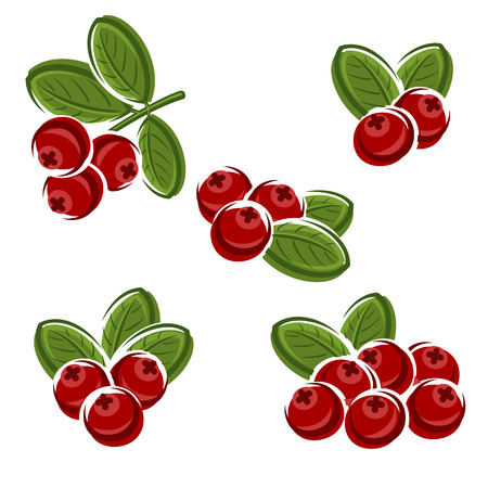 Cranberry set. Vector Illustration