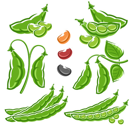 plants: Beans set. Vector Illustration