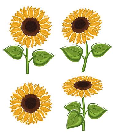 sunflower drawing: Sunflower seeds set.