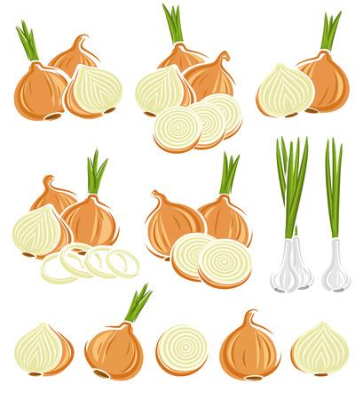 onion: Onion set.