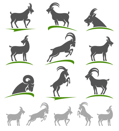 domestic goat: Goat set. Vector