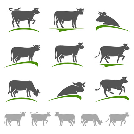 cow vector: Cow set. Vector