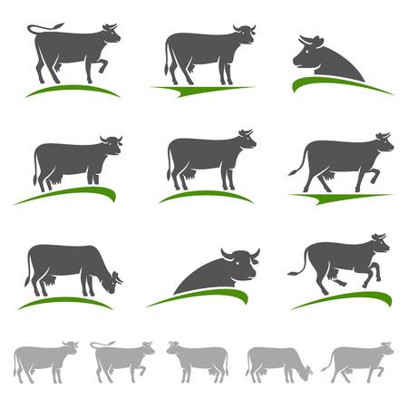 cow vector: Cow set. Vector