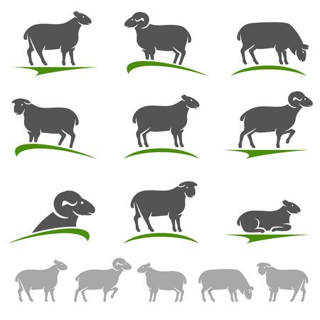 Sheep and lamb set. Vector Vector