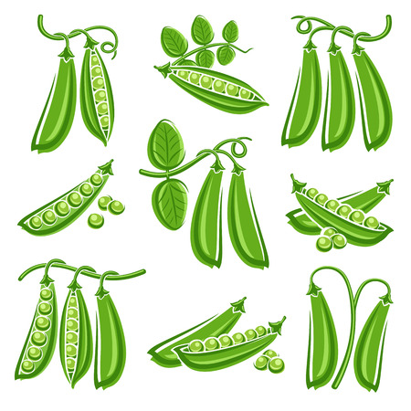 Peas set. Vector
