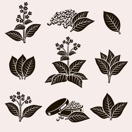 hojas antiguas: Hoja de tabaco establecido. Vector Vectores