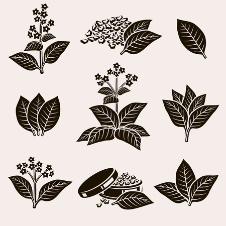 Tobacco leaf set. Vector Çizim