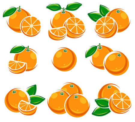 Oranges set. Vector Иллюстрация