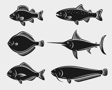 flounder: Fish set. Vector