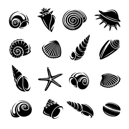 seashell: Seashells set.