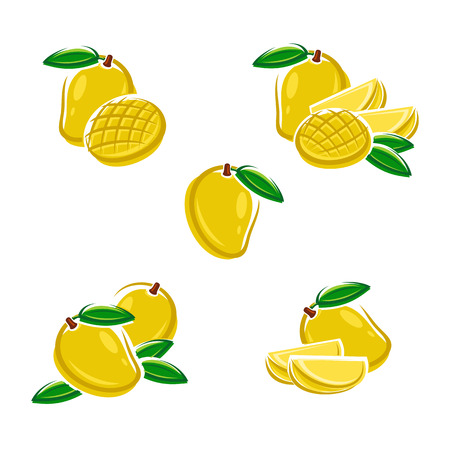 mango leaf: Mango set. Vector Illustration