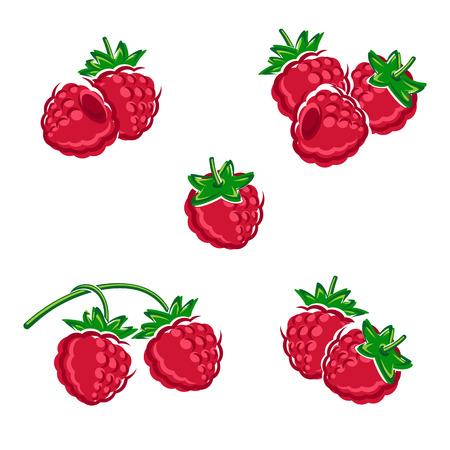 Raspberry set. Vector illustration fruit Illustration