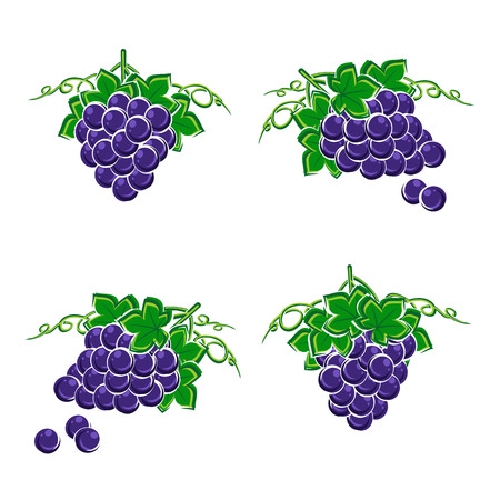 Grapes set. Vector Çizim