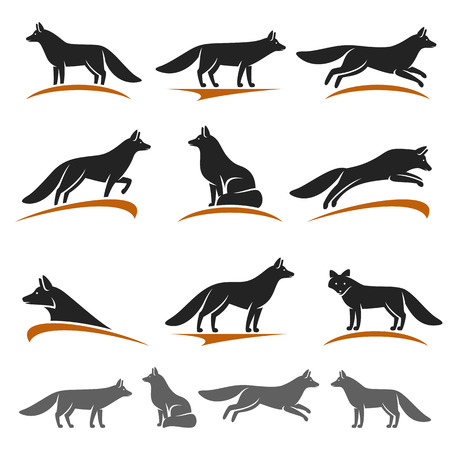 Fox set. Vector Illustration