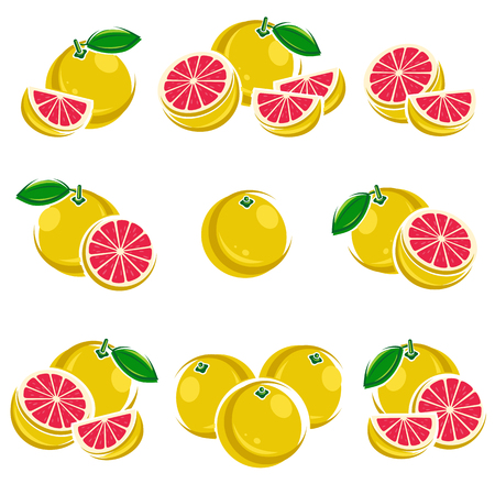 grapefruit: Grapefruit set. Vector illustration  fruit