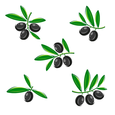 illustration collection: Olive set. Vector illustration collection