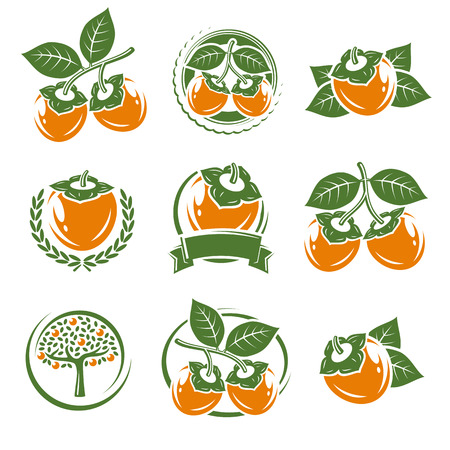 persimmon: Persimmon labels and elements set. Vector illustration