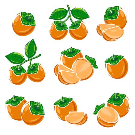 persimmon: Establece Fruta del caqui. Ilustración vectorial