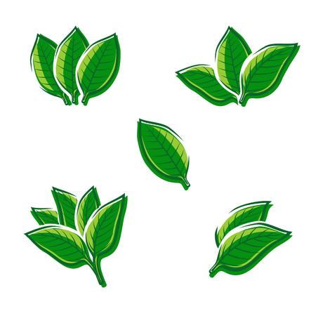 tobacco plant: Tobacco leaf set. Vector illustration